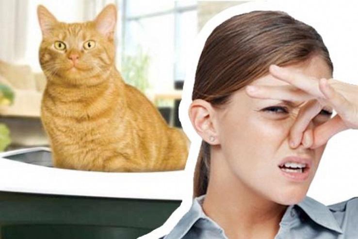 Запах мочи домашних животных в Липецке