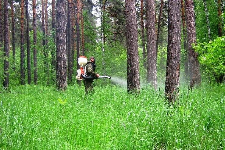 Обработка от клещей лесных массивов в Липецке